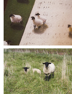8515_sheep_2